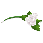 Banner Exclusive White Rose Headband