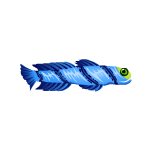 Bluebarred Goby Fish