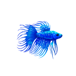 Sky Blue Betta Fish