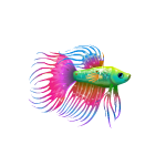 Multicolored Betta Fish