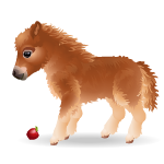 Banner Adorable Gems Miniature Pony