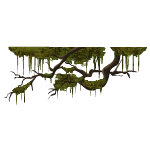 Swamp Branches with Moss