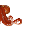 Animated Giant Octopus