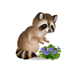 Cute Violets Loving Raccoon