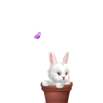 Butterfly and Bunny in Pot