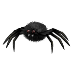 Black Giant Spider