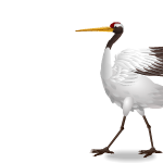 Animated Red-Crowned Crane