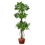 Ficus Tree - No Water Required