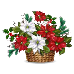 White and Red Poinsettia in Basket