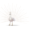 Animated White Peacock