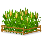 Fenced Corn Garden