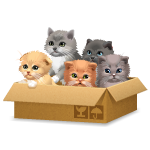 Cute Kittens in Box
