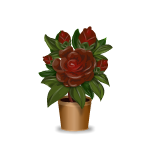 Gothic Roses in Pot