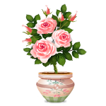 Pink Roses in Country Style Vase