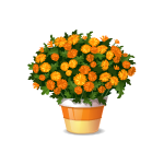 Orange Flowers in a Pot