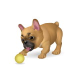 Banner Playful French Bulldog
