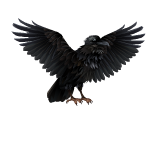 Animated Giant Black Crow