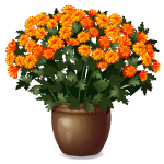 Habi - Fall Orange Flowers in Pot