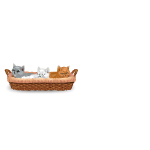 Banner Kittens in Basket