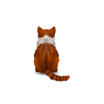 Animated Backfacing Cat