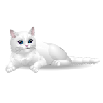 Content White Kitty