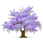 Purple Blooming Spring Tree