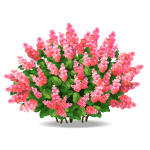 Pink Blooming Bush