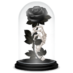 Black Rose under Dome