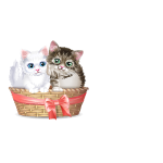 Banner Two Kittens in Basket
