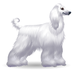 Animated White Afghan