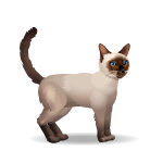 Banner Animated Siamese Cat