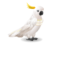 Banner Animated Cockatoo