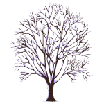 Snow Covered Tree 1