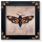 Vintage Moth Wall Art